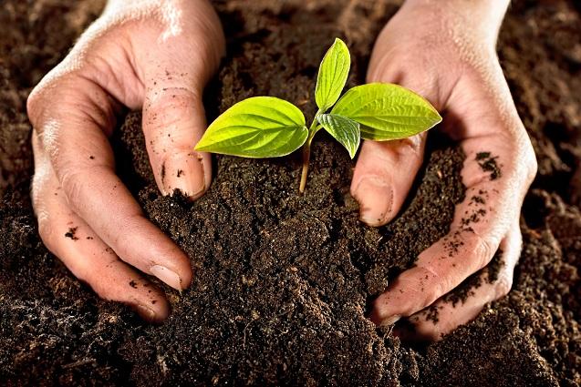 تولید و فروش خاک مناسب زیتون